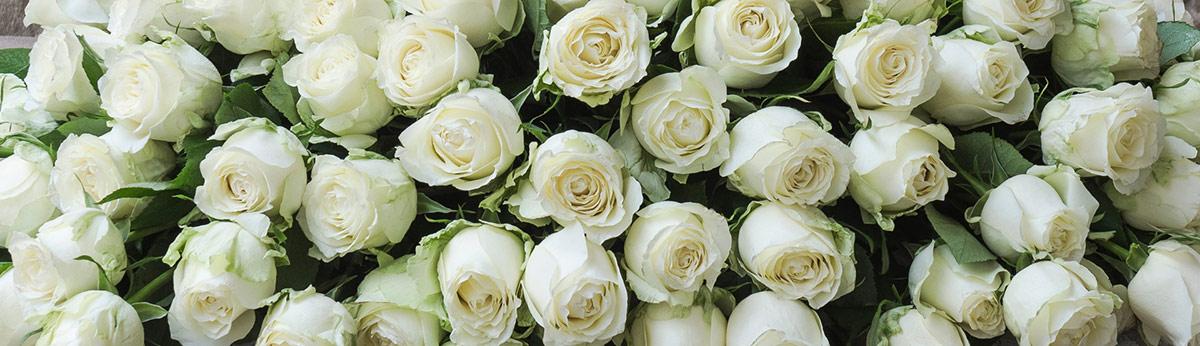 Sēru ziedi Ziedu pušķi atvadām krematorijā