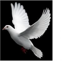 Neri Pieminekļu Serviss SIA Logo