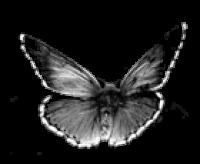 Dzintra Regīna Jansone, tēlniece Logo
