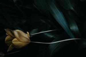Kā pasūtīt sēru ziedus attālināti?